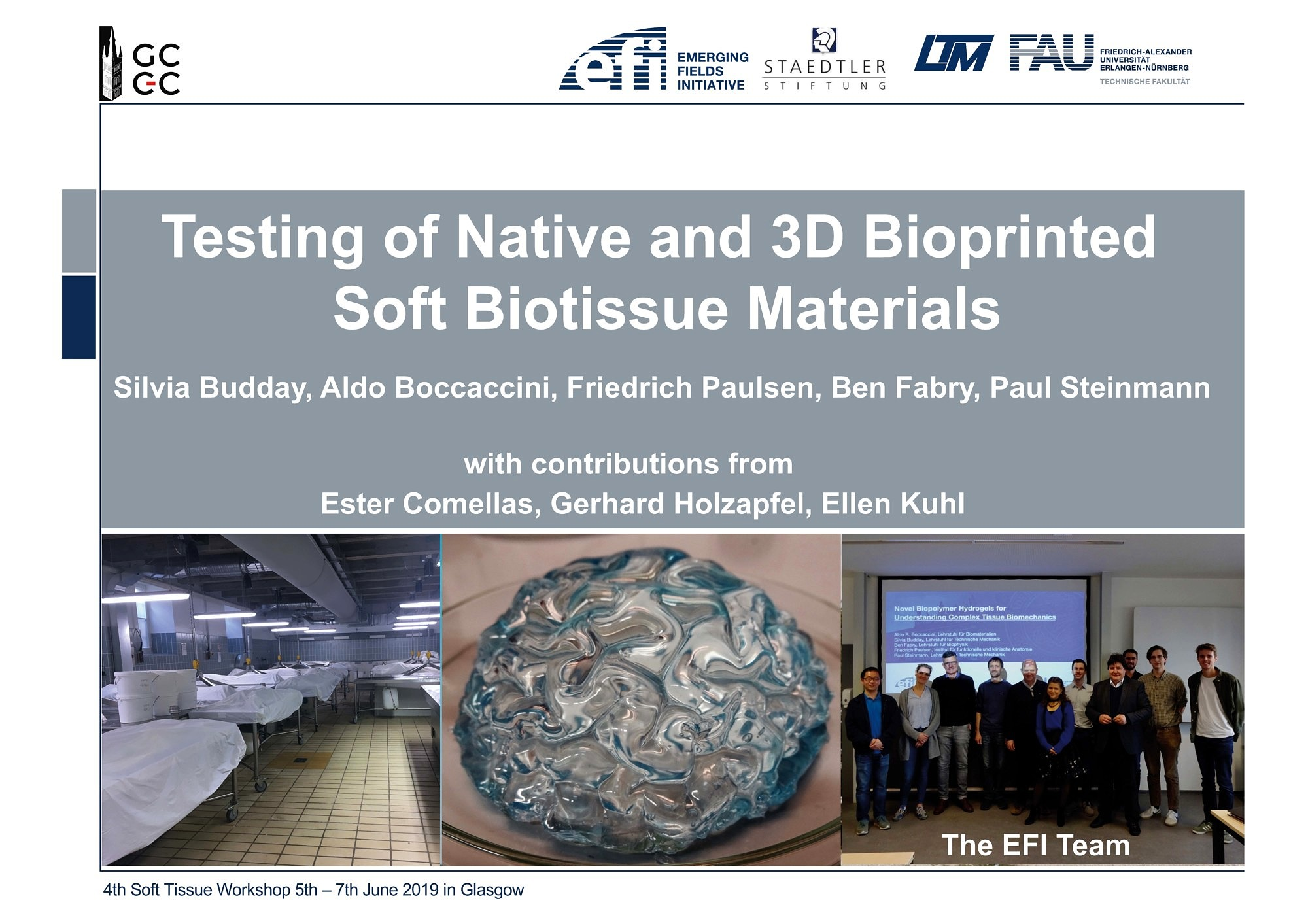 "Towards entry ""Prof. Paul Steinmann presents EFI vision at the Soft Tissue Modelling Workshop"""